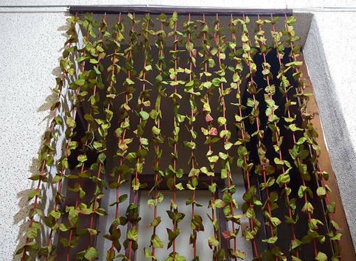 Декоративна завеса за врата листа с размери 90x190cm